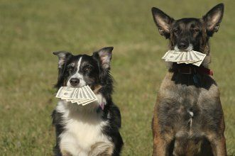 Financial Animals 8 Pets Who Can Teach Us Money Lessons Pet Insurance Cost Dog Insurance Pets
