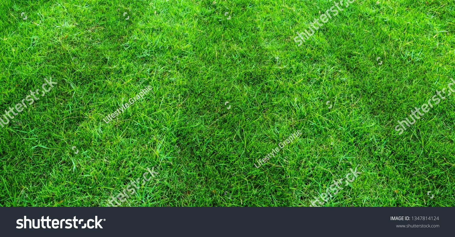 Green grass field pattern background for soccer and