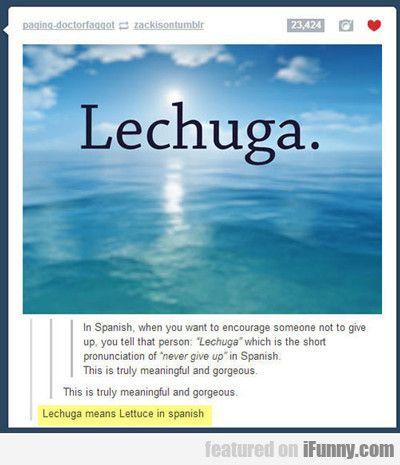 Lechuga…