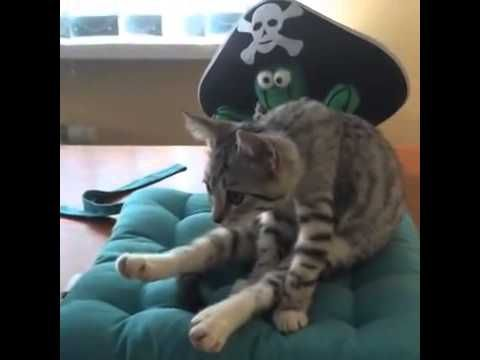 Gato muestra pose de Yoga