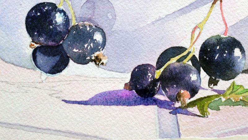 Cassis Groseilles En Rouge Et Noir Fruits Aquarelle