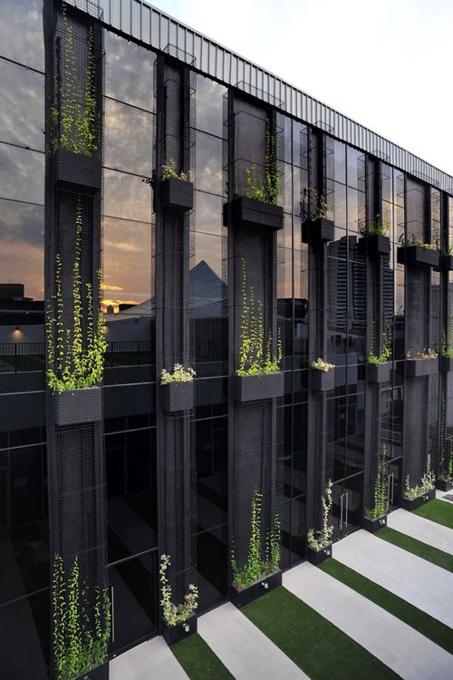 Troughs with climbers on facade of building green walls - Building a living wall ...