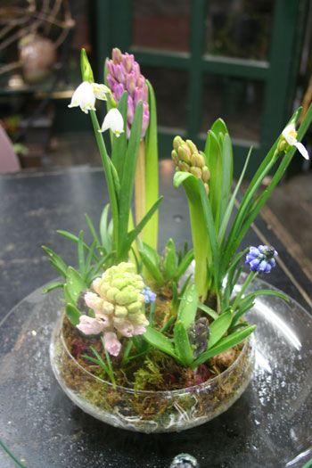 Spring terrarium