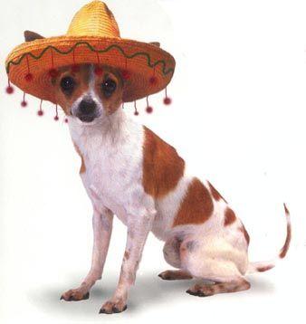 Chihuahua Dogs Chihuahua Dogs Chihuahua Love Chihuahua