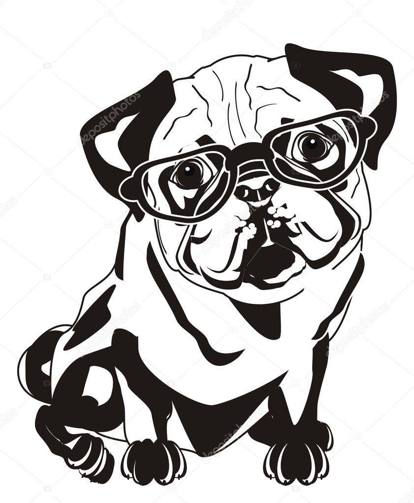 Black White Pug Glasses Stock Photo Sponsored Pug White