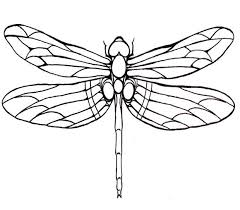 Dragonfly Template Printable Google Search Dragonfly Drawing Dragonfly Art Coloring Pages
