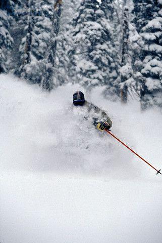 Skier Skiing Fresh Deep Powder In Backcountry Near Fernie East Kootenays British Columbia Canada Snow Skiing Alpine Skiing Powder Skiing