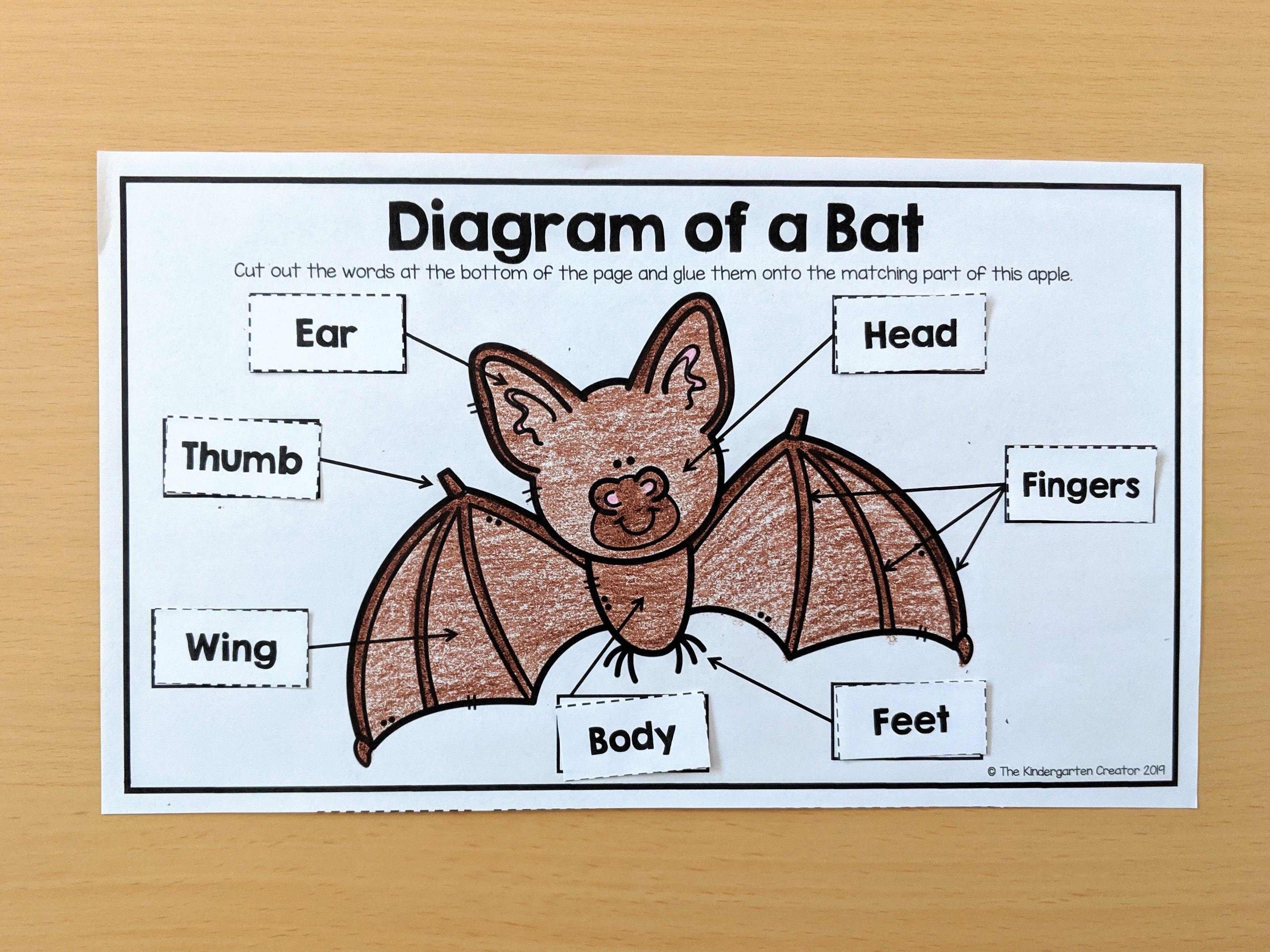 Bat Diagram