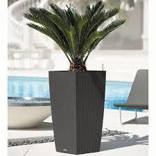 r sultat de recherche d 39 images pour plante palmier. Black Bedroom Furniture Sets. Home Design Ideas