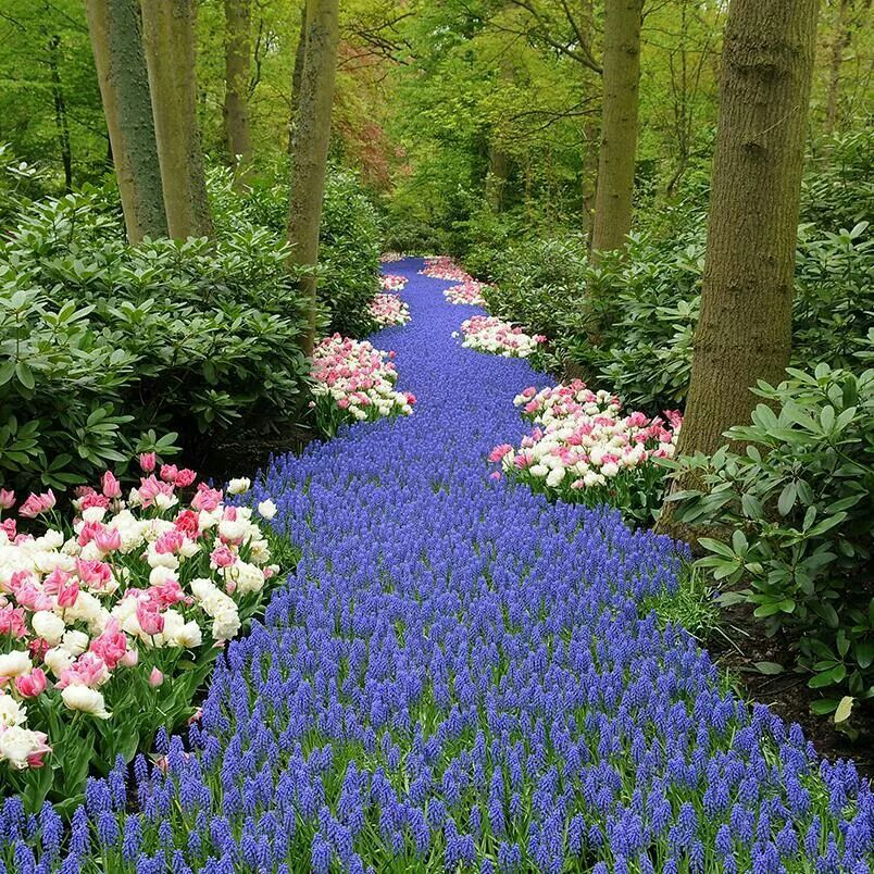 Follow the bluebell path