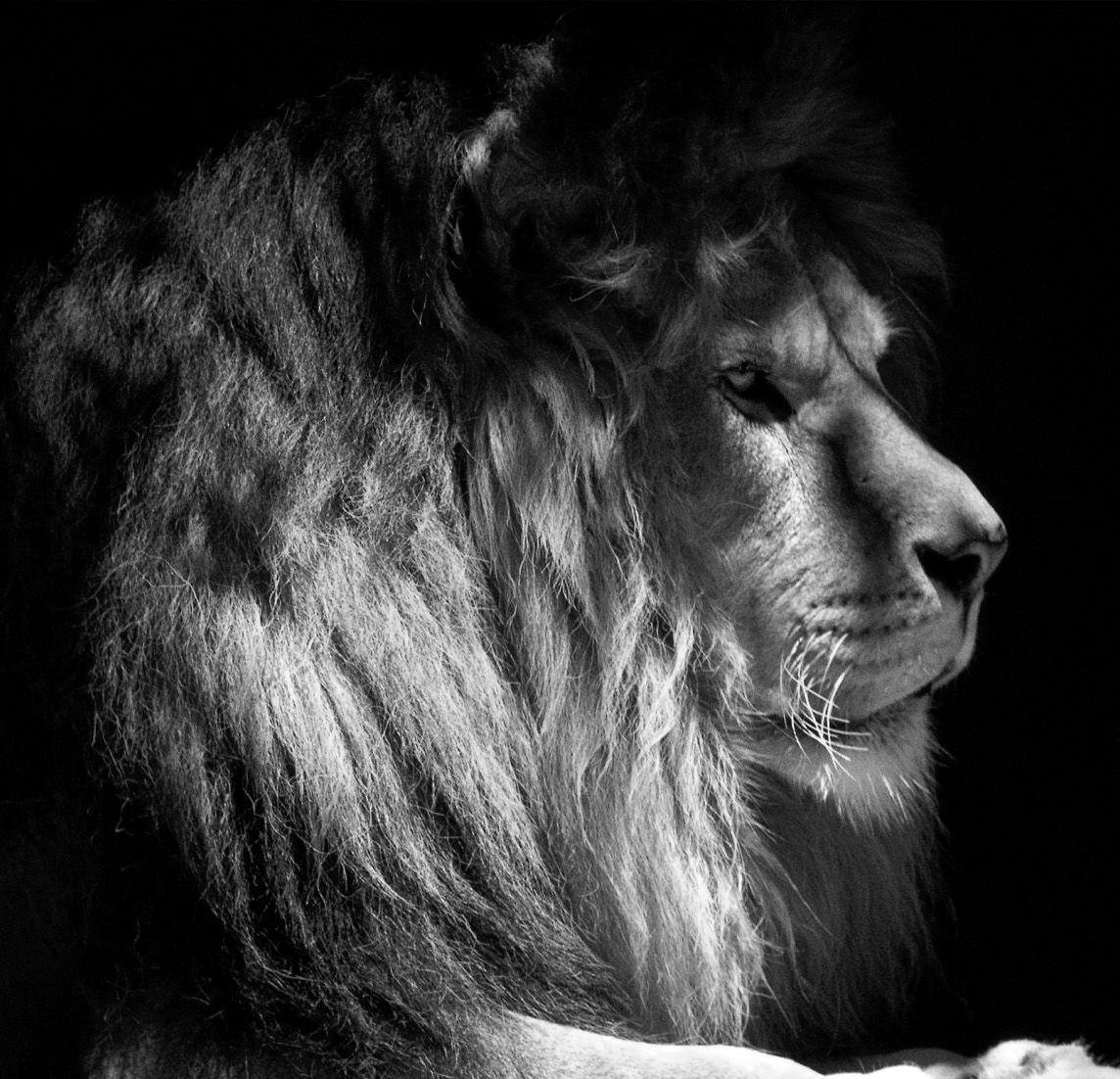 Pin By Daniel On Animals Animals Totem Rasta
