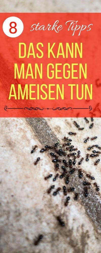 Ameisen im Haus bekämpfen - was hilft gegen ameisen in der küche