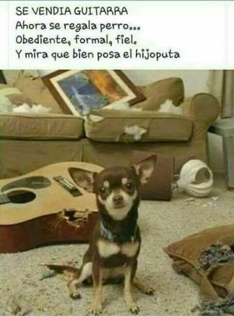 Pin De Yeiden Staxz En Humor Perros Adopcion De Perro Regalo Perro