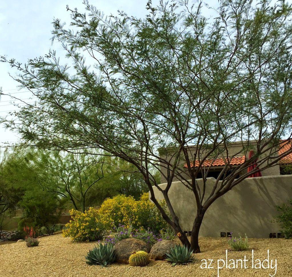 Garden landscape trees  pretty  Exterior  Pinterest  Desert trees Growing flowers and