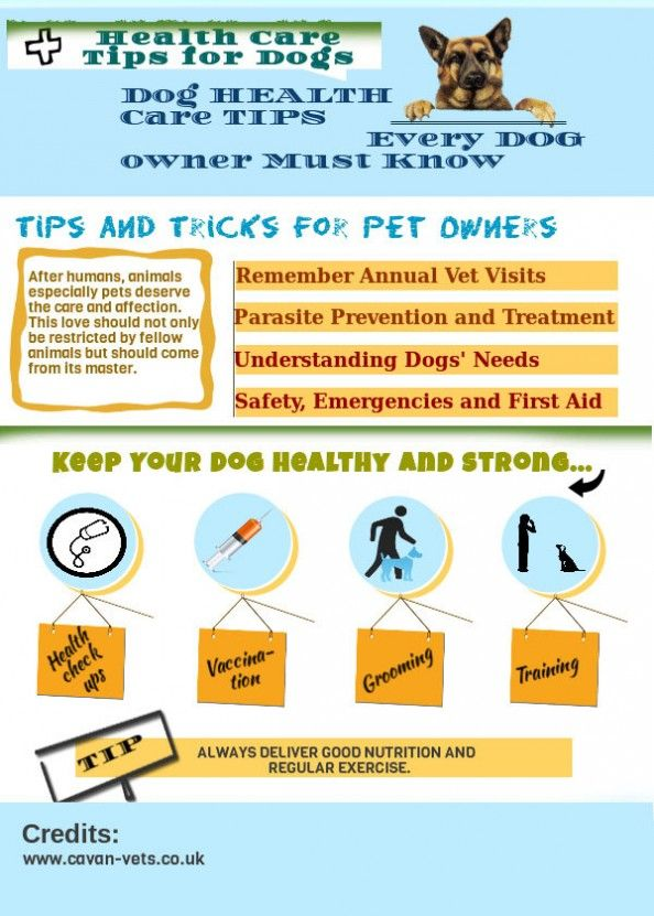 Dog Health Tips Important Tips To Remember Dogs Pets Canine