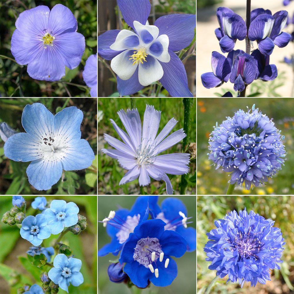 Blue Wildflower Names Wildflower Mixture, Dazzling Blue