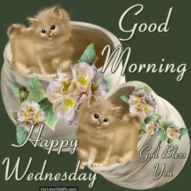 Image result for nice wednesday image with kitten