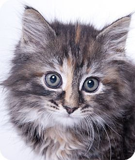 Pin On Adoptable Pets Board