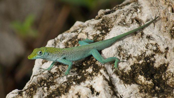 What Do Small Lizards Eat Small Lizards Baby Lizards Lizard