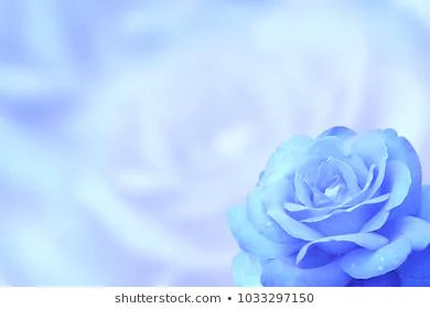 Pin By Cornelius Berry On Desktop Rose Background Blue Roses Wallpaper Blue Rose