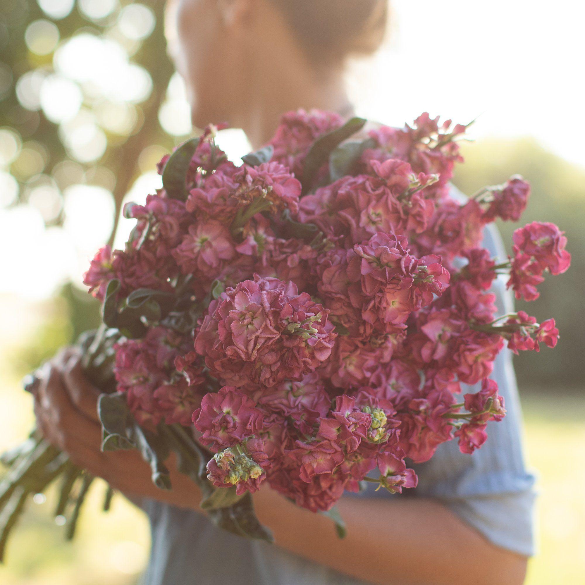 Stock Vintage Brown Stock flower, Flower farm, Flowers