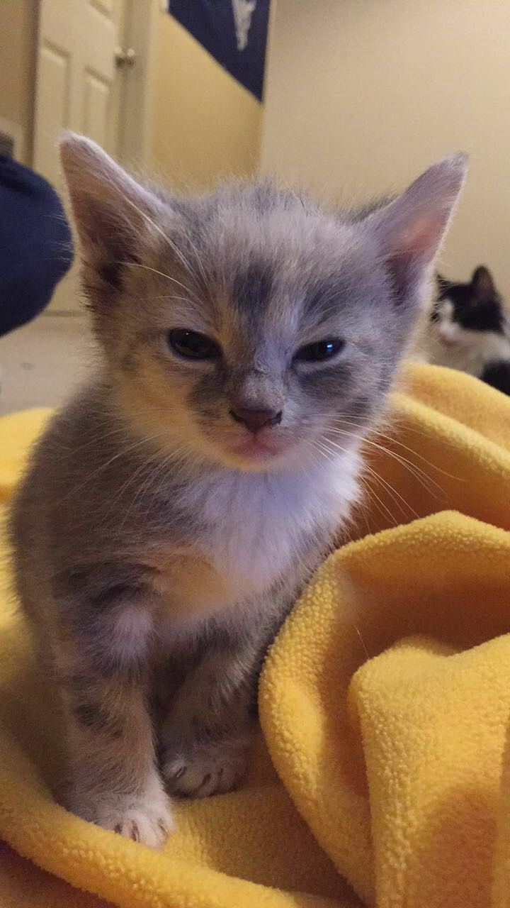 What Are You Looking At Punk Album On Imgur Kittens Cutest Kitty Kittens