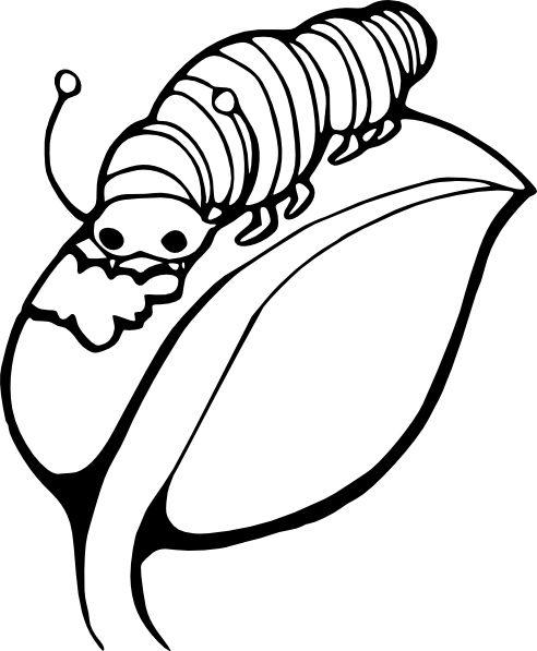 Silkworm Colouring Pages Page 2 Butterfly Coloring Page