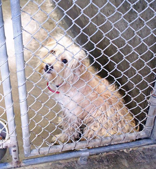 07 07 14 Odessa Please Help Female Terrier Mix 1 2 Years Old
