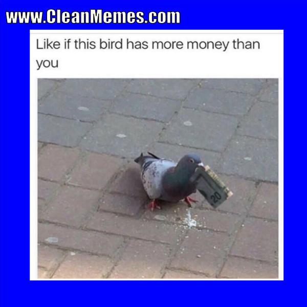 Pin By Clean Memes On Clean Memes Clean Memes Bird Parrot