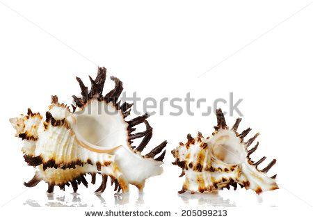 seashells composition by Donatella Tandelli, via Shutterstock
