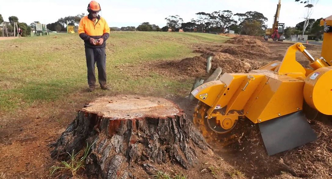 Stump Grinding & Removal Stump removal, Tree care, Tree