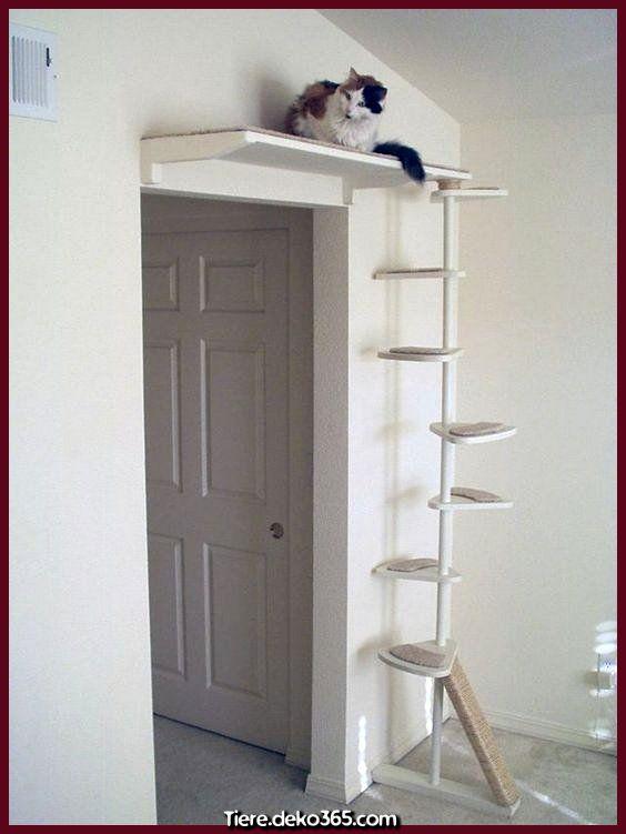 Photo of Creativo y genial Lo mismo que hacen las personas por lo mejor de sus gatos … Incluso posible …