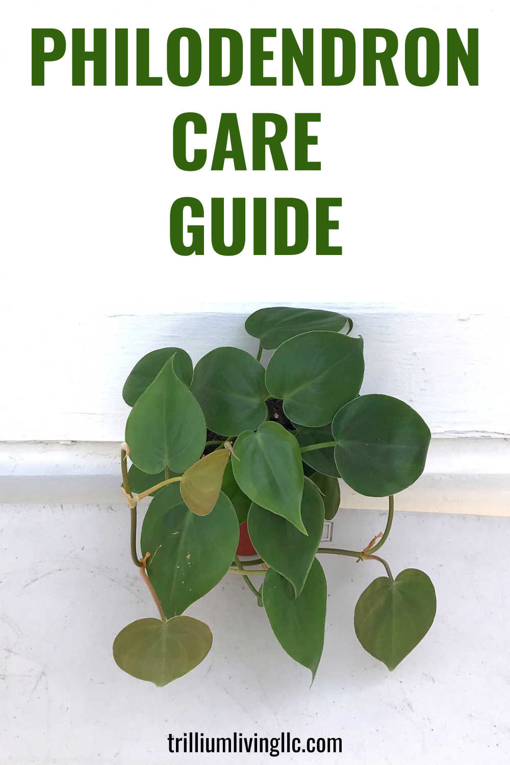 Living With Plants A Guide To Indoor Gardening