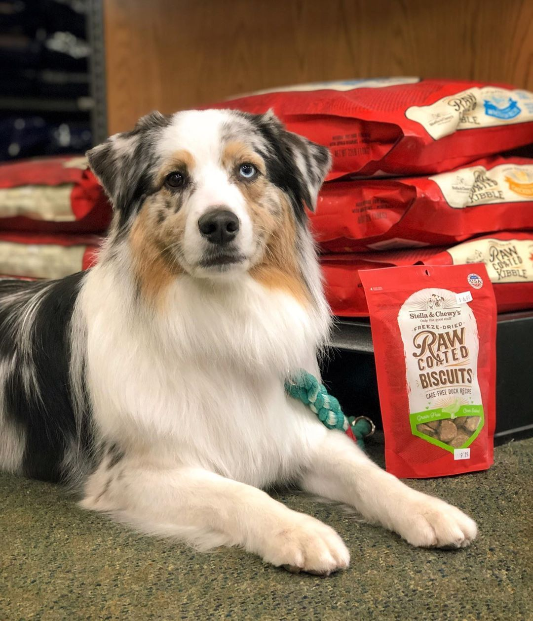Ad It S Small Business Week I Love Visiting All Of Our Local Independently Owned Pet Stores Anytime We Can We Stopp Pet Store Small Business Week Pets