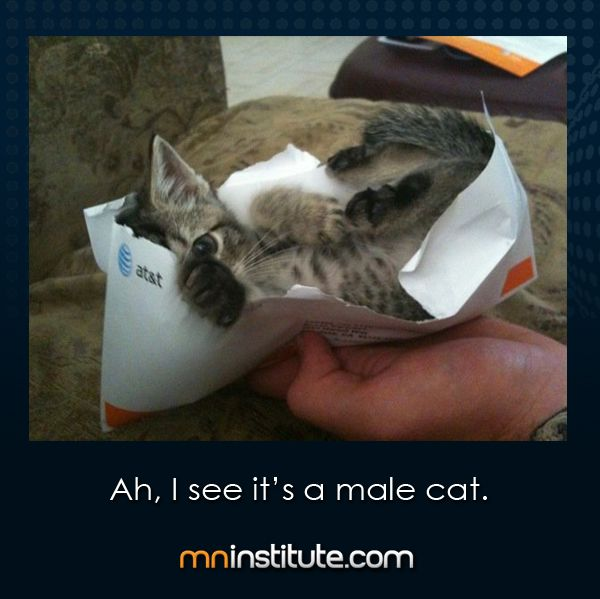 """""""Ah, I see it's a male cat."""" Nice to see I'm not the only one who thinks such things are funny."""
