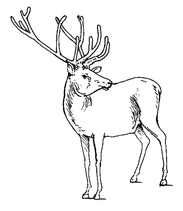 Elk Checking Situations Coloring Pages Download Print Online Coloring Pages For Free Color Nimb Coloring Pages Online Coloring Pages Castle Coloring Page