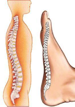 pierderea de grăsime dnp pierdere în greutate durere sciatica
