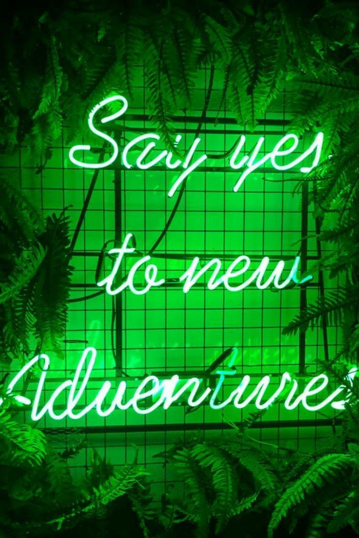 Imagem por Emily Trindade em 1Green Estética verde