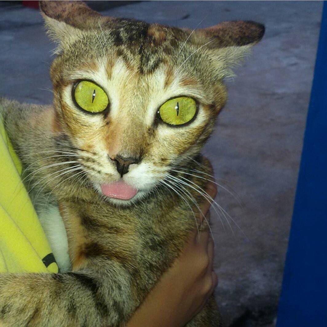 92+ Gambar Gambar Kucing Jelek Terlihat Cantik