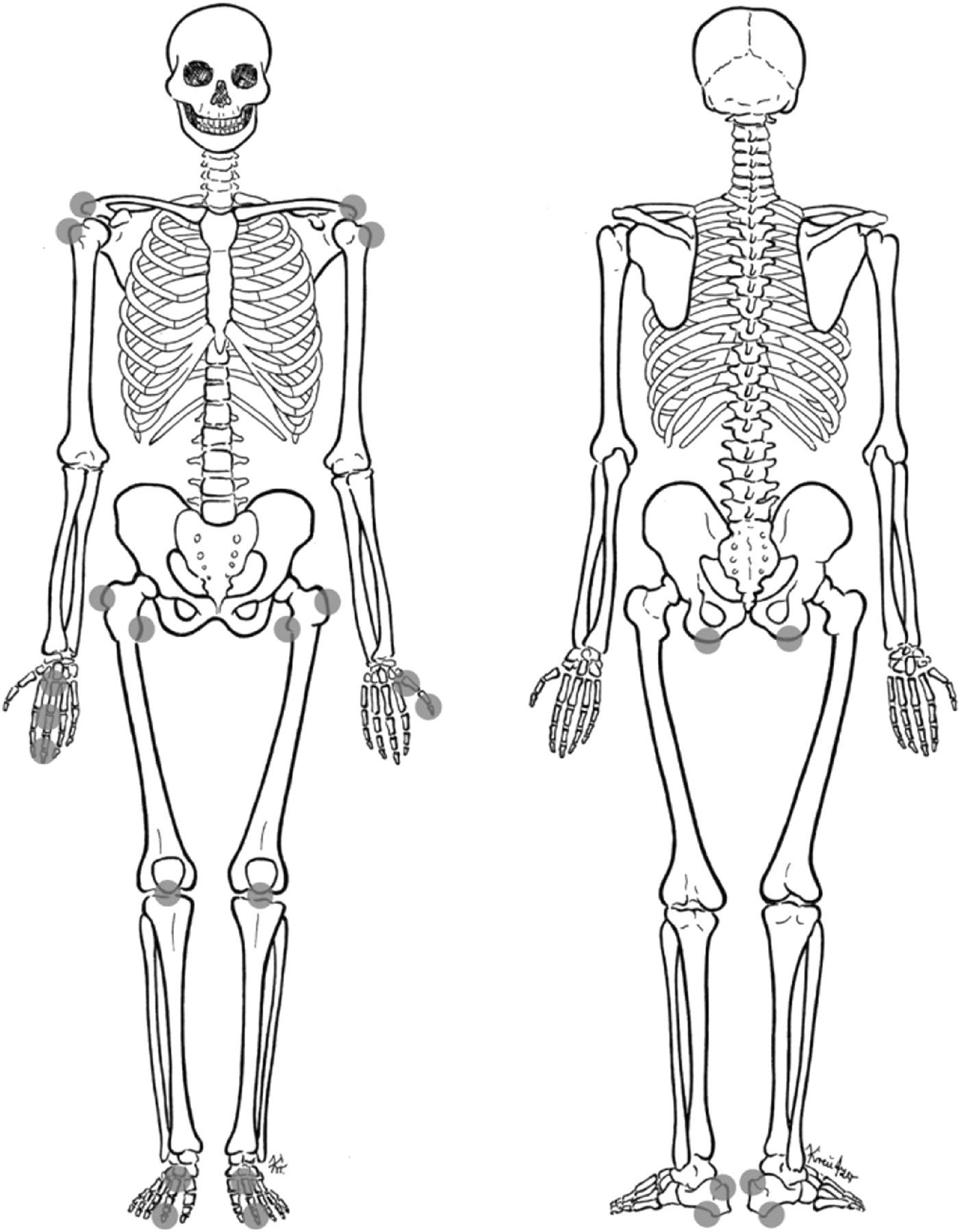unlabeled human skeleton diagram unlabeled human skeleton diagram labeled diagram of skeletal system printable human [ 1405 x 1800 Pixel ]