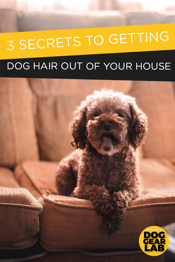 3 Secrets To Getting The Dog Hair Out Of Your House Dog Hair Brown Dog Dogs