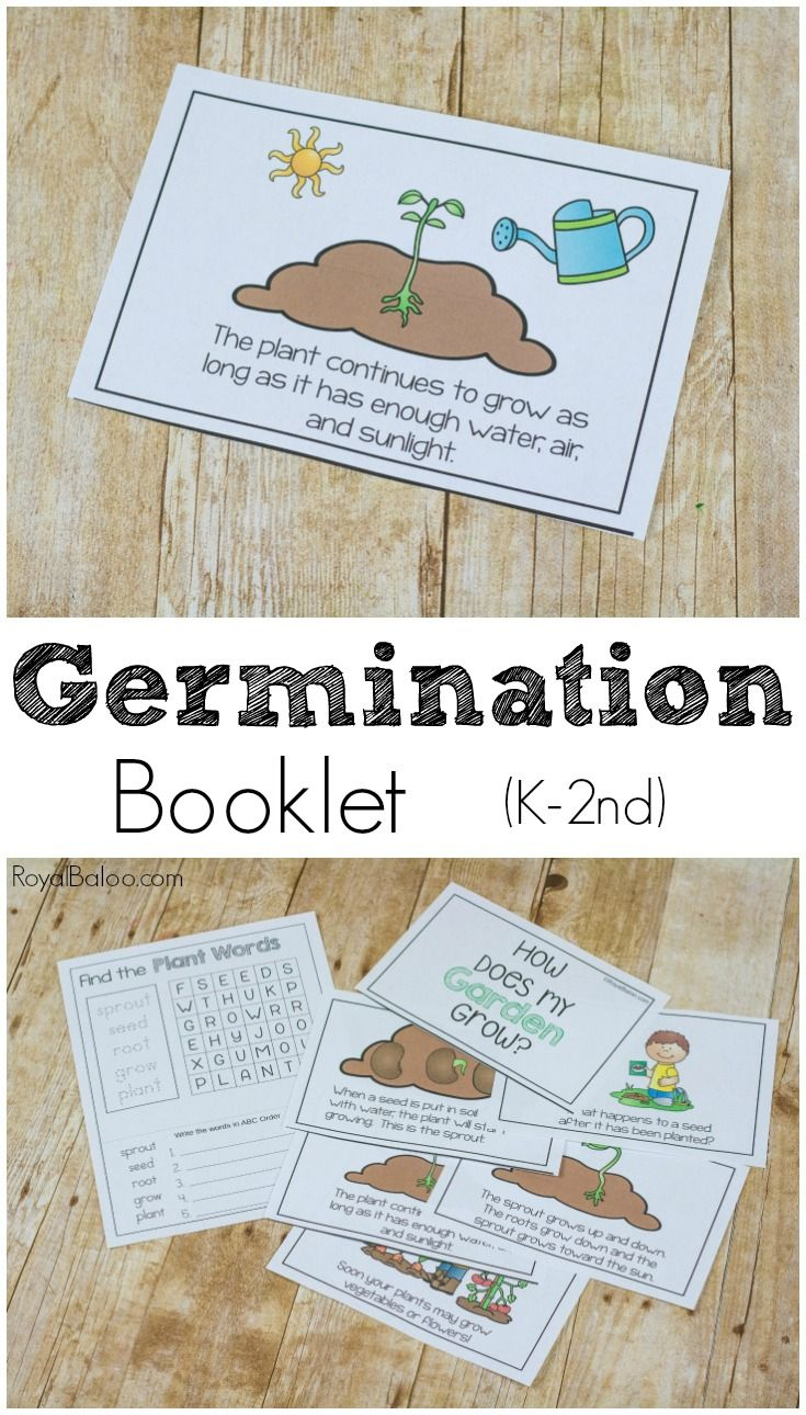 Germination Or Life Cycle Of A Plant Booklet Royal Baloo Seed Germination For Kids Plant Science Plant Life Cycle [ 1290 x 735 Pixel ]