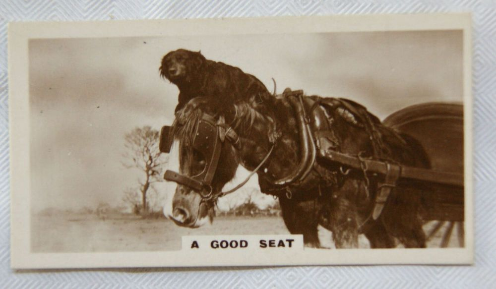 De Reszke Real Photos 2nd series No. 18 A Good Seat - Dog riding on horse s head