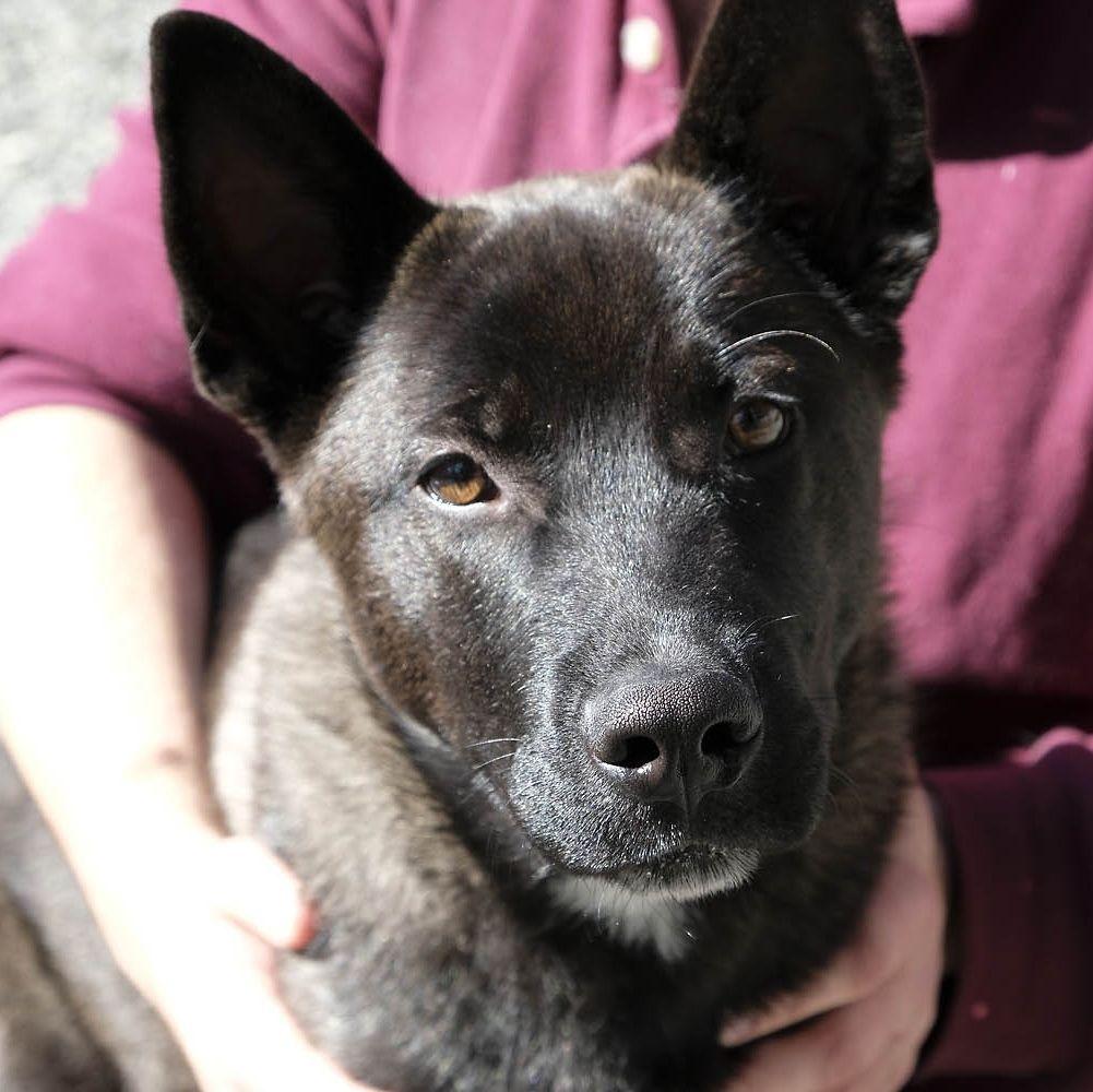 Adopt Bronson on German shepherd dogs, Dog search, Dogs