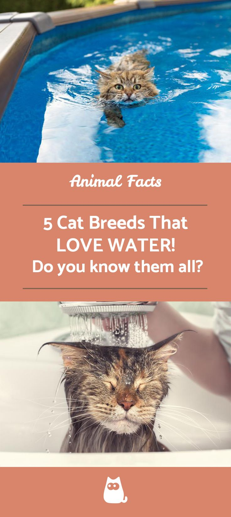 Cat Breeds That Like Water (con imágenes)