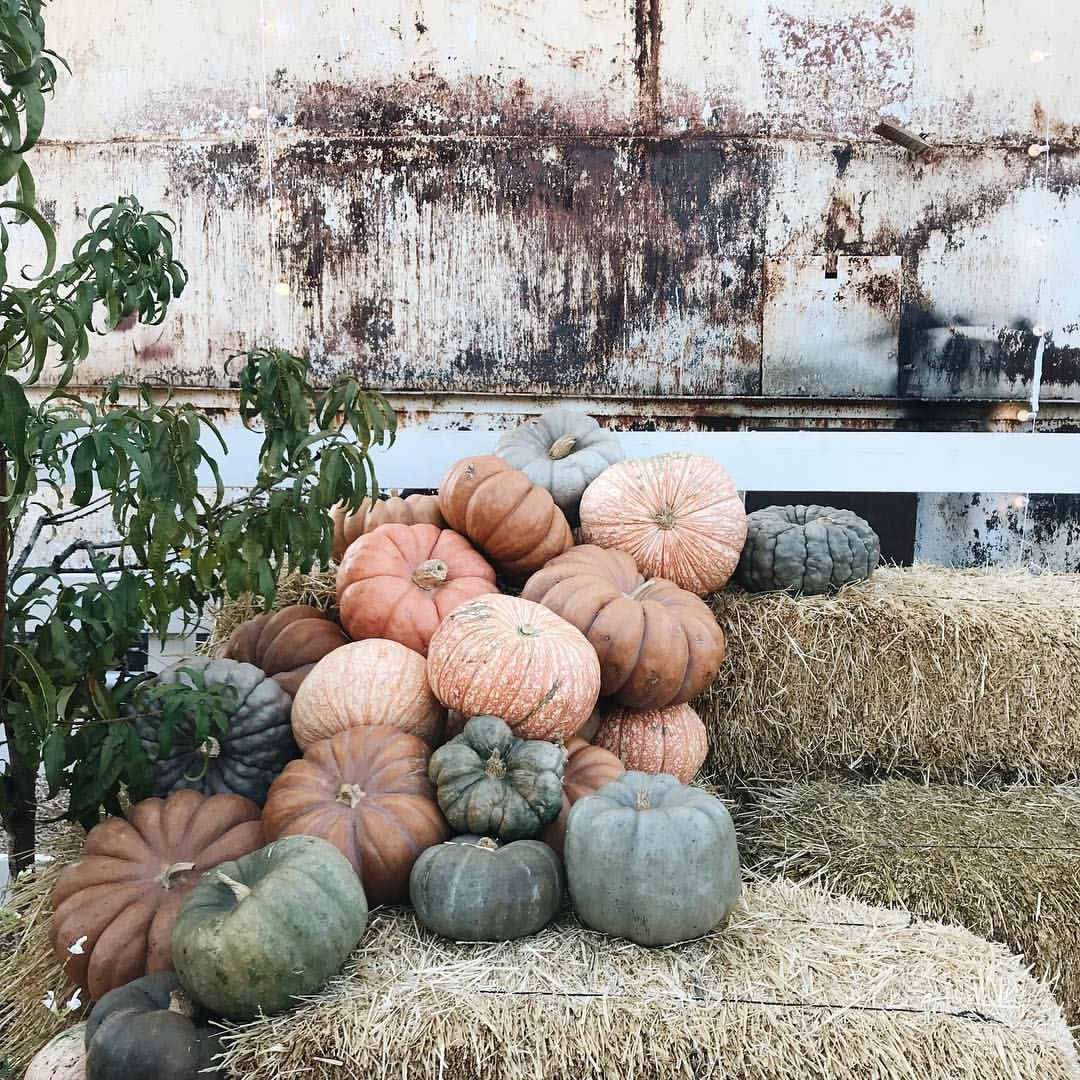Hgtv Thanksgiving Decorations: Pin By Claudia Urias Enciso On Joanna Gaines/Chip Gaines