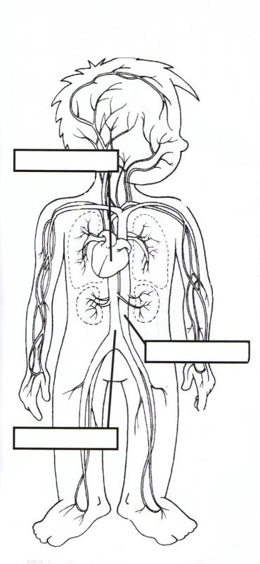 Las partes del cuerpo humano para niños | człowiek - części ciała ...