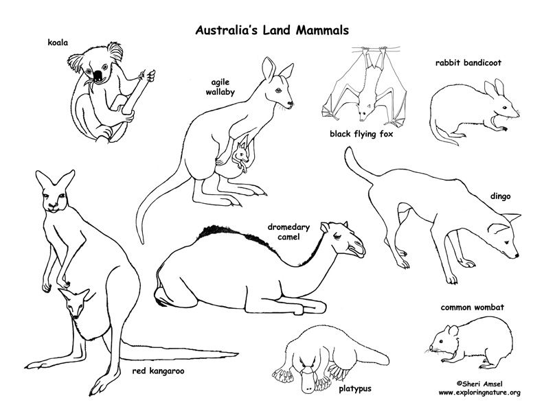 It's just a graphic of Dynamic Australian Animals Coloring Pages