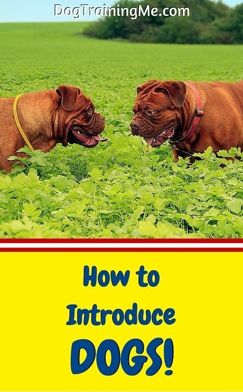 Learn How To Introduce Your Dog To Other Dogs Calmly Quit