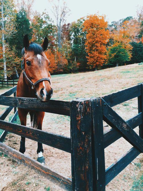 Absolutelystunninghorses
